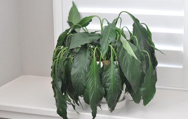 Растение без длительного полива